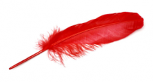 818571-fireshot_capture__14____resizr___easy_onred feather