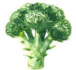 Brassicasa